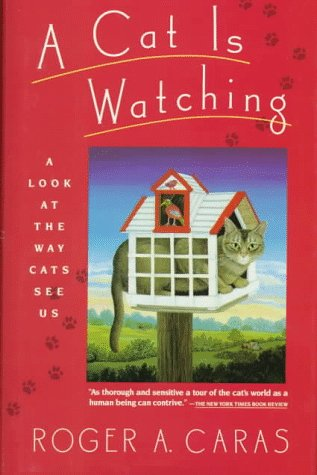 A Cat is Watching: A Look at the Way Cats See Us
