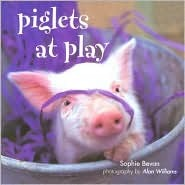 Piglets at Play by Sophie Bevan
