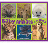 Baby Animals of the World