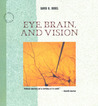 Eye, Brain, and Vision