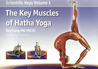 The Key Muscles of Hatha Yoga