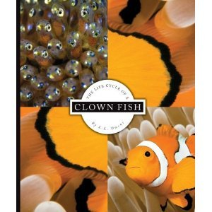 The Life Cycle of a Clown Fish