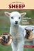 Sheep: Small-Scale Sheep Keeping For Pleasure And Profit (Paperback)