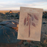 Rock Art Made in Translation: Framing Images of and from the Landscape