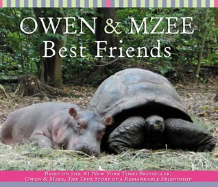 Owen And Mzee Best Friends