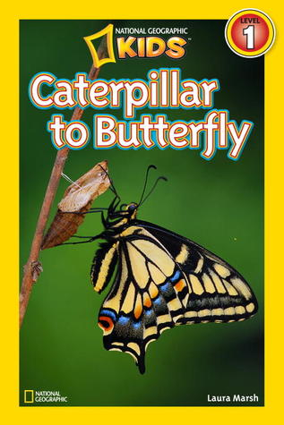 Caterpillar to Butterfly by Laura F. Marsh