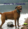 Chester The Chesapeake by Barbara Ebel
