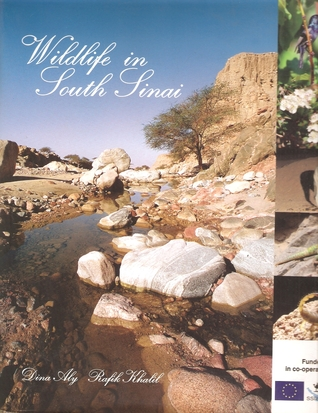 Wildlife in South Sinai by Dina Aly