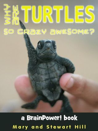Why Are Turtles So Crazy Awesome?