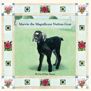 Marvin the Magnificent Nubian Goat