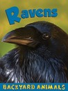 Ravens (Backyard Animals)
