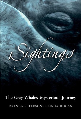 Sightings: The Gray Whales' Mysterious Journey