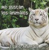 Me Gustan Los Animales / I Like Animals (Rourke Board Books) (Spanish Edition)