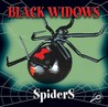 Black Widows (Spiders)