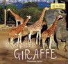 Meet the Giraffe