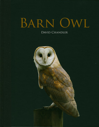 Barn Owl by David  Chandler