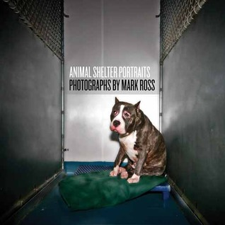 Animal Shelter Portraits