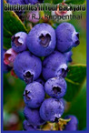Blueberries in Your Backyard