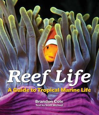 Reef Life by Brandon Cole