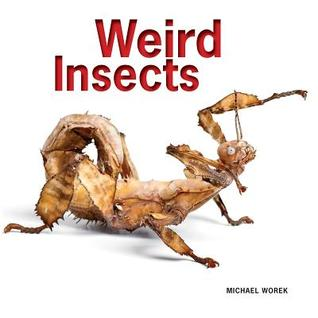 Weird Insects