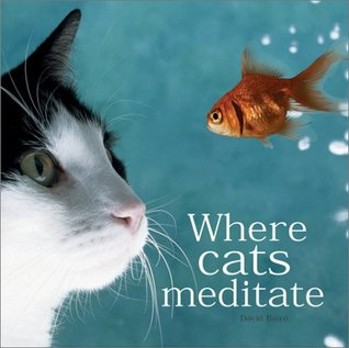 Where Cats Meditate