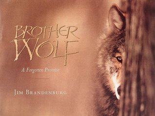 Brother Wolf by Jim Brandenburg