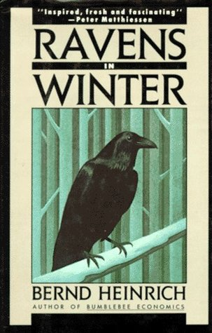 Ravens in Winter by Bernd Heinrich