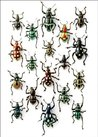"CHRISTOPHER MARLEY WALKING WEEVILS 5"" X &"" UNLINED NOTEPAD"