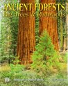 Ancient Forests: 2012 Wall Calendar