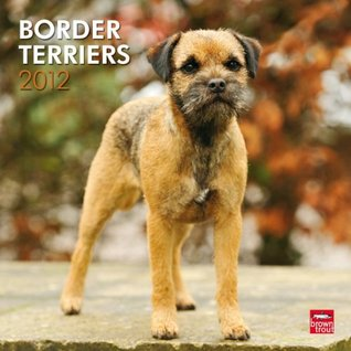 Border Terriers 2012 Square 12X12 Wall Calendar NOT A BOOK