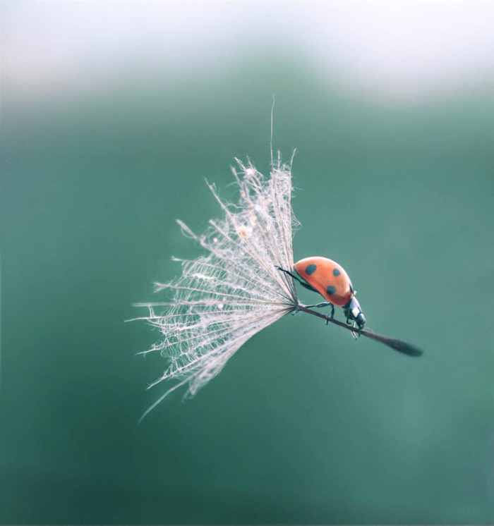 ...and that random picture of a ladybug.