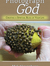 Photograph  God book cover