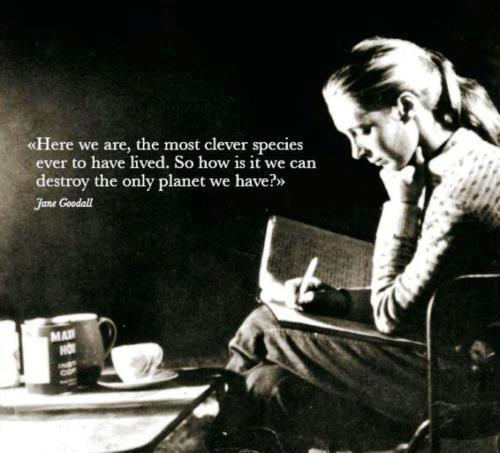 """Jane Goodall Quotes: Quote By Jane Goodall: """"Here We Are, The Most Clever"""
