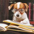 Henry & Biggs: Adventure Blog of a Literary Agent and his Beagle