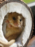 theDormouse