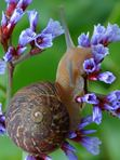 Snail in Danger (Sid) Nicolaides