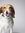 citybeagle