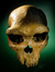 PaleoAnthropology+