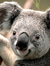Jacob Plecker