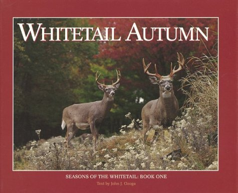 Whitetail Autumn  by  John J. Ozoga