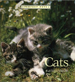 Cats  by  Kathryn Hinds