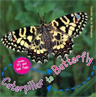 Caterpillar to Butterfly (Life Cycles) Camilla De la Bedoyere