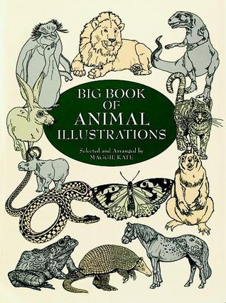 Big Book of Animal Illustrations  by  Maggie Kate