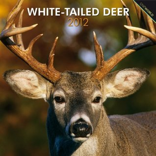 White-Tailed Deer 2012 Square 12X12 Wall Calendar  by  NOT A BOOK