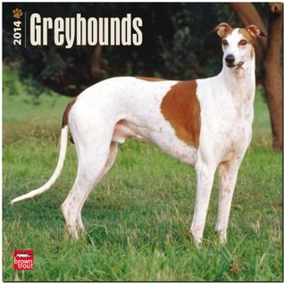 Greyhounds Calendar NOT A BOOK