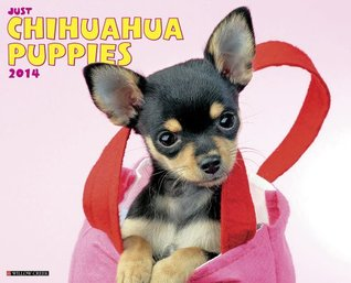 Just Chihuahua Puppies 2014 Wall Calendar  by  NOT A BOOK