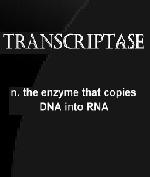 Transcriptase  by  Danny Adams