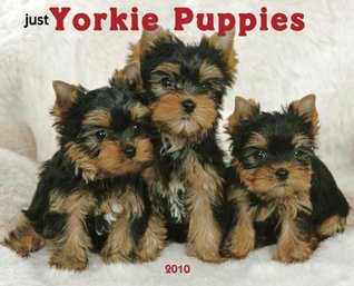 Just Yorkie Puppies 2010 Calendar  by  NOT A BOOK