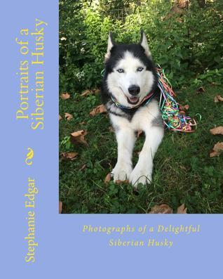 Portraits of a Siberian Husky by Stephanie Edgar